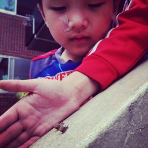 One of the Samsungwon children watches snails race